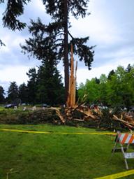 Image: Tree Hit By Lightning
